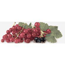 Decor Tutti Frutti Ribes 10x30
